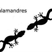 Zone gd salamandre face à face